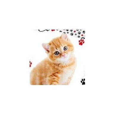 "Dvipusis patalynės komplektas ""Kitty"", 140x200 cm 2"